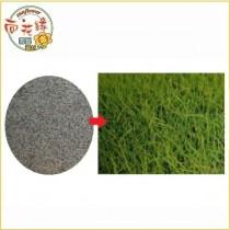【向花緣】百慕達草(狗牙根、鐵線草) 種子 1kg - 草皮種子