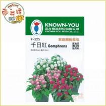 【向花緣】農友 千日紅 - 花卉種子
