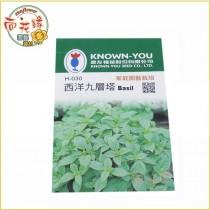 【向花緣】農友 西洋九層塔 - 香藥草種子