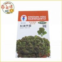 【向花緣】農友 紅波芥菜 - 特選種子