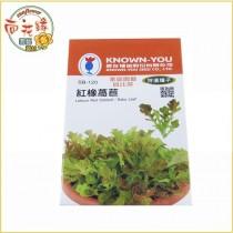 【向花緣】農友 紅橡萵苣 - 特選種子