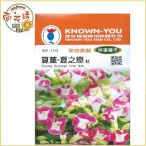 【向花緣】農友 夏菫-夏之戀(紅) - 特選種子