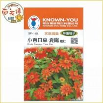 【向花緣】農友 小百日草-夏陽(橙紅) - 特選種子
