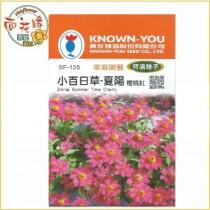 【向花緣】農友 小百日草-夏陽(櫻桃紅) - 特選種子