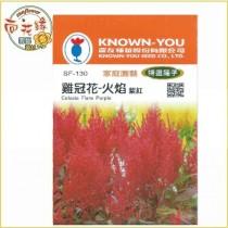 【向花緣】農友 雞冠花-火焰(紫紅) - 特選種子