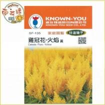 【向花緣】農友 雞冠花-火焰(黃) - 特選種子