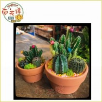 【向花緣】仙人掌組盆 - 2.5吋盆(小)